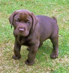 when i graduate college and get my own house this is the dog im going to get... his name will be moose =)