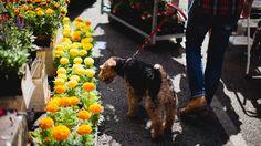 PARK & CUBE puppy + flower