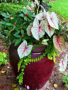 Shade: New Guinea impatiens, caladium White Queen, creeping jenny
