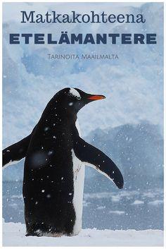 Matkakohteena Etelämantere - Tarinoita Maailmalta