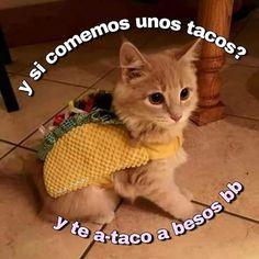 Taco cat spelled backwards is taco cat. Taco Cat, Top Memes, Best Memes, Romantic Memes, Memes Lindos, Cute Love Memes, Spanish Memes, Most Popular Memes, Wholesome Memes