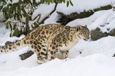Djamila running in the snow