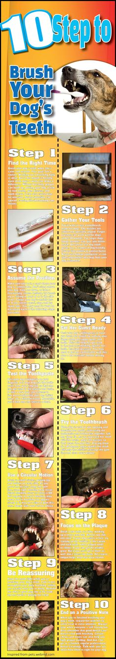 10 Step To Brush Your Dog's Teeth