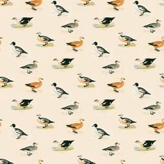 Golden Eye - Golden Eye | Linwood Fabrics