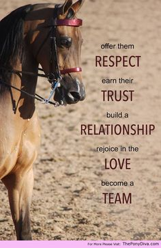 Respect - http://theponydiva.com/respect/