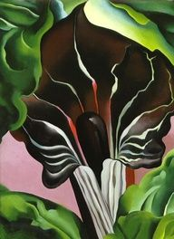 """dotifications: """" Jack in the Pulpit II Georgia O'Keeffe - Jack in the Pulpit """" Georgia O'keeffe, Wisconsin, New Mexico, Santa Fe, Georgia O Keeffe Paintings, Jack In The Pulpit, Wow Art, Arte Floral, Community Art"""