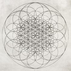 My soul's musical ear knew and comprehended everything. ― Vladimir Nabokov                    ; Flower of Life by Chad Lassin