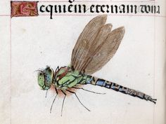 Requiem with a marginal dragonfly book of hours, Bruges or Ghent 15th century. Beinecke Rare Book and Manuscript Library, MS http://discardingimages.tumblr.com287, fol. 161v
