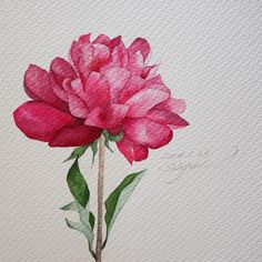 🎗Today is a gift! Watercolor Images, Watercolor And Ink, Watercolor Flowers, Watercolor Painting Techniques, Watercolour Painting, Art Floral, Color Pencil Art, Botanical Prints, Flower Art