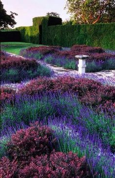 The purple in this garden is stunning and its structure is very intriguing