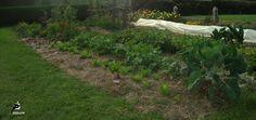 La Révolution des sols vivants - Le jardin de mes étoiles