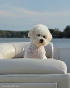 Gracie on pontoon boat   homeiswheretheboatis.net #NationalLoveYourPetDay #LakeNorman