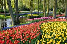 Keukenhof Gardens in Netherlands
