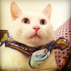 Mini me #cuties #beautiful #cats #fluffy