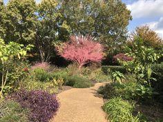 Atlanta Botanical Garden, Botanical Gardens, Plants, Flora, Plant