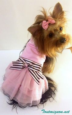 Ropa y accesorios para perros encuentra estos lindos modelos en Toutmignon.net