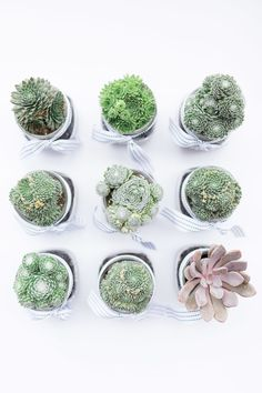 #gifts, #escort-cards, #succulent, #place-cards, #potted-plants, #plants, #favor Photography: Alyssa Rosenheck Photography - alyssarosenheck.com Read More: http://www.stylemepretty.com/living/2014/08/28/diy-succulent-place-cards/