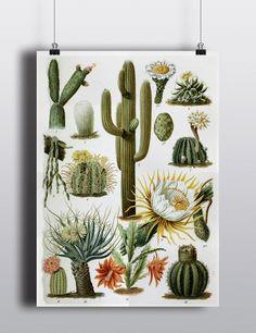 Antique 1800s Cactus Chart Poster Art Print Illustration Scientific Chart Botanical Botany Plants Nature Print Cacti Succulents Wall Decor by TheBlackVinyl on Etsy https://www.etsy.com/listing/209048537/antique-1800s-cactus-chart-poster-art
