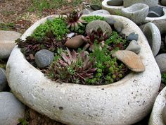 made in a sack? Nice organic form .....big dish planter may 2011 by sarahammocks, via Flickr