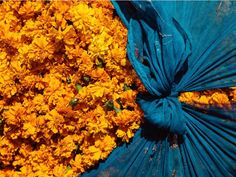marigold flowers wrapped in teal blue linen fabric. Cut Flowers, Fabric Flowers, San Francisco Girls, Teal Fabric, Linen Fabric, Marigold Flower, Travel Expert, Vogue Australia, Instagram Worthy
