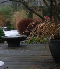 almbacken-winter-garden-hydrangeas-gardenista