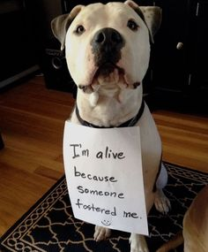 ❤Love it! We rescued a mixed breed and was one if the best decisions we made! All need and deserve good home!