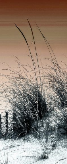 ✯ Sea Grass. #beach
