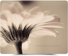 Henrietta Hassinen - beautiful floral photography