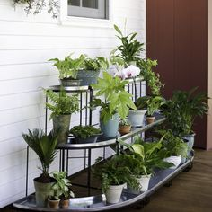 This tiered plant stand set features one Straight Plant Terrace and two Quarter-Round Terraces. Save when you purchase the set. 100% Satisfaction Guaranteed