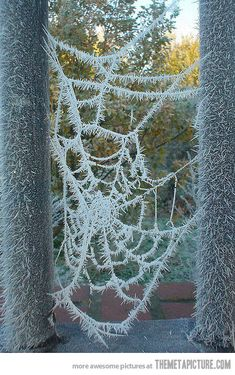 This brilliant sculpture is a frozen spider web.  How cold was it exactly?