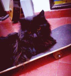 \(*0*)/  Mi gato me robo mi skate