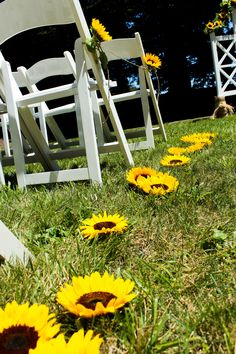 Sunflowers line the sides of the wedding aisle #SunflowerWedding #Aisle #GroheFlorists #Sunflower #sallytomatoes #rohnertparkeventcenter