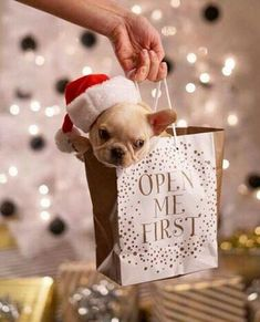 french bulldog Christmas puppy