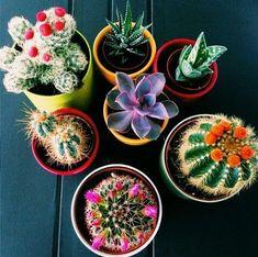 dream home, home, casa, home decor, decor, decoration, decoração, plantas, plantinhas, jungle, urban jungle, plants, flowers, cactus, cacto