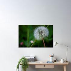 """Dandelion on green background"" Poster by victorsboutique | Redbubble"
