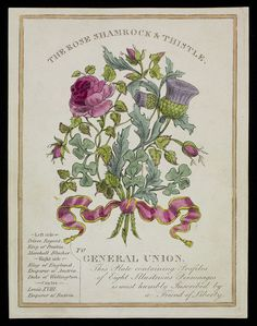 The Rose Shamrock & Thistle (Print) | V&A Search the Collections