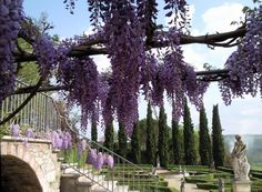 Under the wistera overlooking La Selva Villa Mansion's Italian garden with cypress trees, boxwood hedging, 500 roses, stone statues and fountain.  A perfect place for an exclusive intimate wedding in southern Chianti, Tuscany
