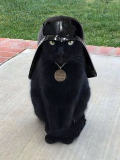 I find your lack of treats disturbing - LOLcats is the best place to find and submit funny cat memes and other silly cat materials to share with the world. We find the funny cats that make you… I Love Cats, Crazy Cats, Cool Cats, Cute Dogs And Cats, Cute Funny Animals, Funny Animal Pictures, Animal Pics, Gatos Cats, Animal Memes