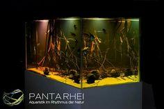 http://shop.panta-rhei-aquatics.com