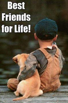 El perro. Un amigo para toda la vida. ¿Qué os parece esta imagen?