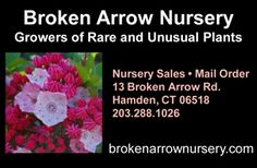 Broken Arrow Nursery (Hamden, CT) - I love this place so much that driving 2 hours EACH WAY to get there is totally worth it. The variety of plant offerings is amazing and such unusual stuff! Great friendly staff. Great prices. The catalog is an education. Check them out. You'll be glad you did. You can even order online.