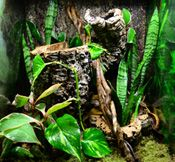 New Cost-Free tarantula habitat Thoughts Alright, thus we all believe crawlers get awful press. The particular media channels is obviously art work bots availab Guinea Pig Toys, Guinea Pig Care, Guinea Pigs, Reptile Cage, Reptile Enclosure, Tarantula Habitat, Gecko Terrarium, Veterinary Technician, Vivarium