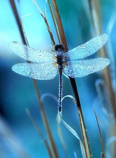 You're So Pretty ~ beautiful dragonfly