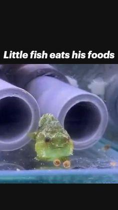 Super Cute Animals, Cute Funny Animals, Cute Baby Animals, Animals And Pets, Crazy Funny Videos, Funny Animal Videos, Tasteless Memes, Cute Reptiles, Cute Fish