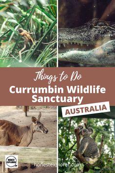 Visiting Currumbin Wildlife Sanctuary in Queensland, Australia