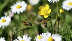 Creatures, creepy crawlies and downright pests! Find out what could be lurking in your garden and what problems they can cause. Bee Removal, Hardy Geranium, Weird But True, Bee Friendly, Weed Killer, Save Animals, Save The Bees, Geraniums, Livestock