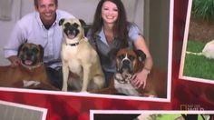 Dog Whisperer with Cesar Millan | Season 9 Episode 10 | Anger Management...