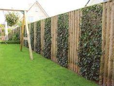 Afbeeldingsresultaat voor bamboe tuinafscheiding