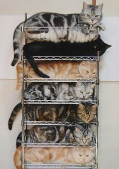 efficient cat storage.    I used to dream of this when my little kids were driving me crazy.  Put them on the shelf and walk away.