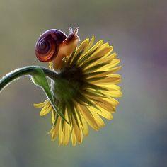 Snail by Vyacheslav Mishchenko